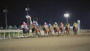 Şanlıurfa Yarışlarında 6'lı Ganyan Devretti
