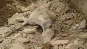 Suruç'ta Ahır Çöktü Hayvanlar Telef Oldu