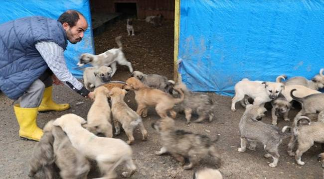Urfa'da Sokak Hayvanları Emin Ellerde