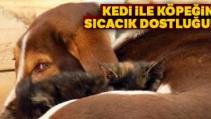 Kedi ile Köpeğin Sıcak Dostluğu