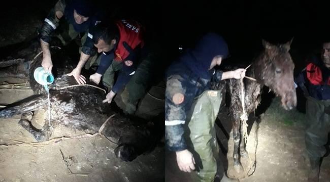 Tahliye kanalına düşen at itfaiye tarafından kurtarıldı
