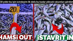 Hamsi Out, istavrit İn