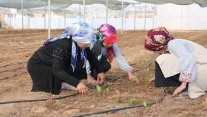 Şanlıurfa Kadınlar Hollanda'ya Meydan Okudu