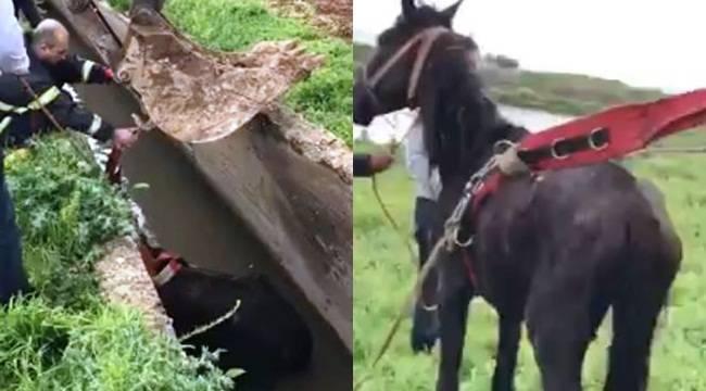 Kanala Düşen At Kepçe Yardımıyla Kurtarıldı