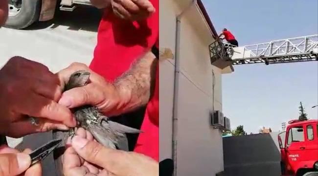 Ebabil Kuşunu İtfaiye Ekipleri Kurtardı