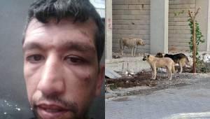 Başıboş Köpekler Vatandaşa Saldırdı