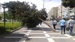 Şanlıurfa'da Ağaçlar Yan Yattı