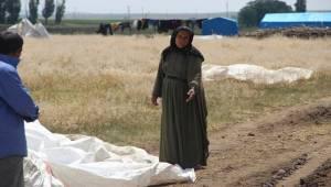Sel felaketinde Urfalı Tarım İşçileride Etkilendi