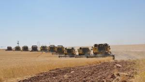TİGEM Ceylnapınar'da Yüksek Buğday Rekoltesi Bekleniyor