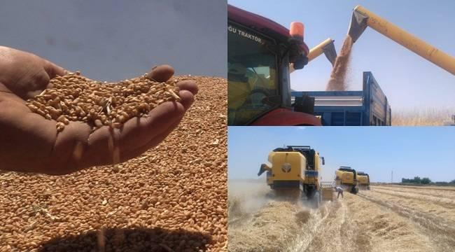 Yerli Tohumlar Çiftçileri Umutlandırdı