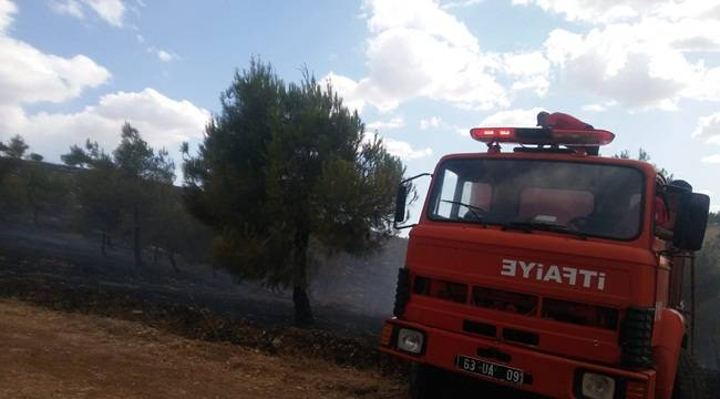 Atatürk Baraj Gölü Ormanında Yangın