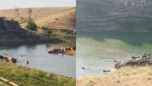Fırat Nehri'nden tehlikeli geçiş