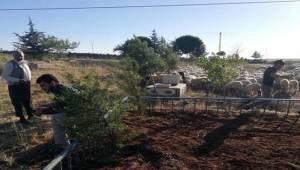 Mezarlıkta Koyun Otlatılmasına Tepki