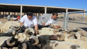 Başkan Çiftçi'den Dişi Hayvan Uyarısı