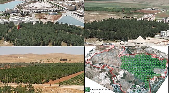 Urfa'nın İkinci Büyük Orman Alanı Oluşturuldu