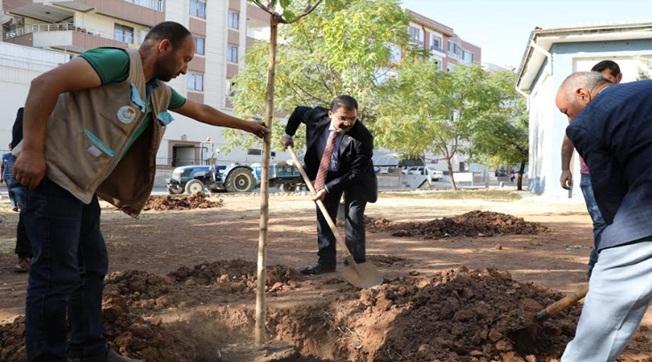Haliliye'de Ağaçlar Toprakla Buluşuyor