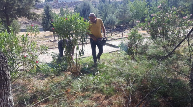 Viranşehir'de Ağaçlara Yıllık Bakım