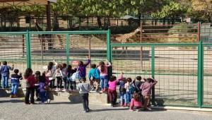 Birecikli Öğrenciler Tatili Hayvanat Bahçesinde Değerlendirdi
