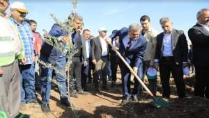 Urfa'da 287 Bin Fidan Dikildi