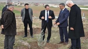 Urfa'da Dikilen Zeytin Fidanlarının Yüzde 90'nı Tuttu