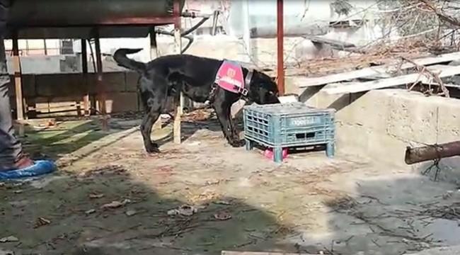 Özel Eğitimli Köpek Bin 350 Uyuşturucu Hap Yakaladı