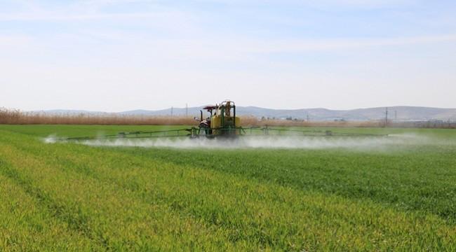 Urfa'da Yem Bitkisi Eken Çiftçiler Umutlu