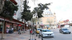 Balıklıgöl Caddesinde Eğilen Ağaç Tehlike Saçıyor
