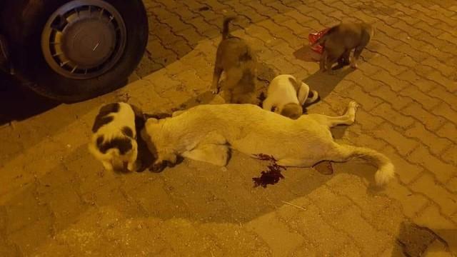 Sokak köpeğini vahşice öldürdüler