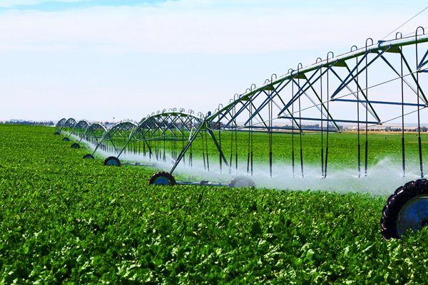 Ceylanpınar'da 60 bin dekar arazi sulamaya açılıyor