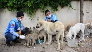 Sokak hayvanlarını özel izinle besliyor