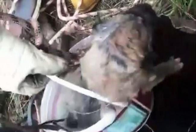 Sondaj kuyusuna düşen yavru köpek kurtarıldı