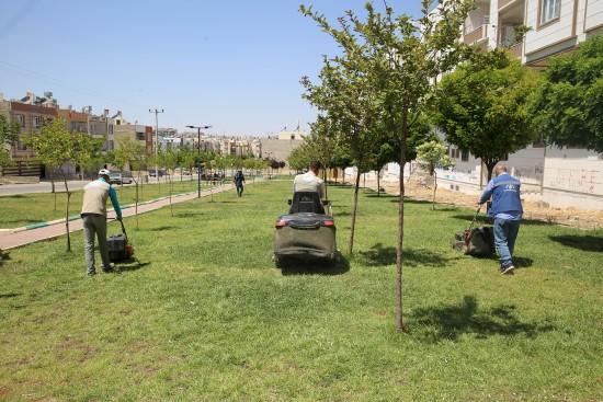 Haliliye'nin parklarında her mevsim bahar (Videolu Haber)