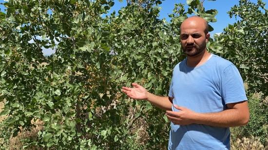Şanlıurfa'da üniversite okurken fıstık yetiştirmeye merak saldı (Video)