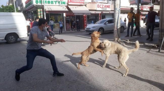 urfa'da dövüşen köpekleri ayırmak istedi