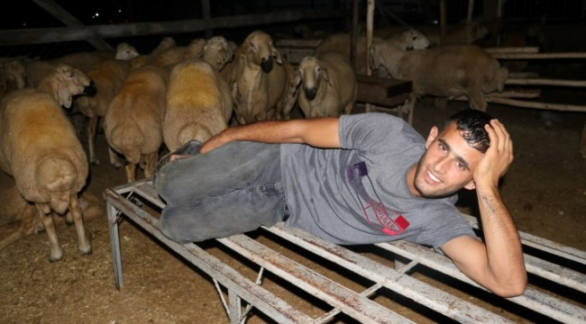 Celeplerin koyun koyuna uykusu (video)