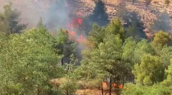 Şanlıurfa'nın Eyübiye ilçesinde orman yangını (Viideo)