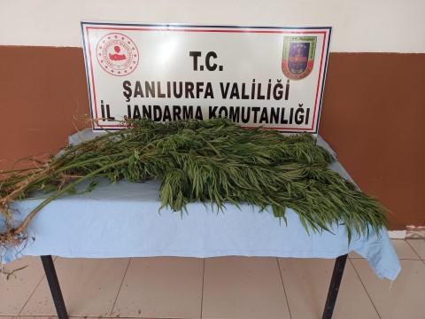 Şanlıurfa'da uyuşturucu operasyonu: 5 gözaltı