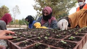 Şanlıurfa Kendi çiçeğini üreterek yıllık 1.5 milyon tl tasarruf sağlayacak (Videolu Haber)