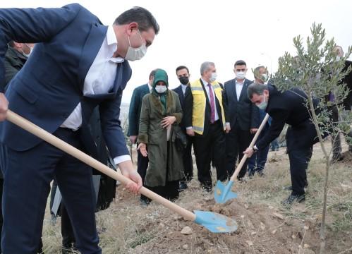 Büyükşehir'den yeni yerleşim alanlarında ağaç dikim seferberliği (Videolu Haber)