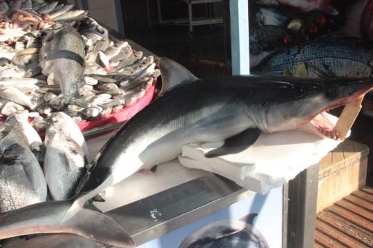 Tezgahta köpekbalığını görenler şaştı kaldı