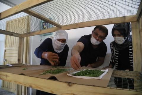 Büyükşehirden ipekböcekçiliği için çiftçiye tam destek