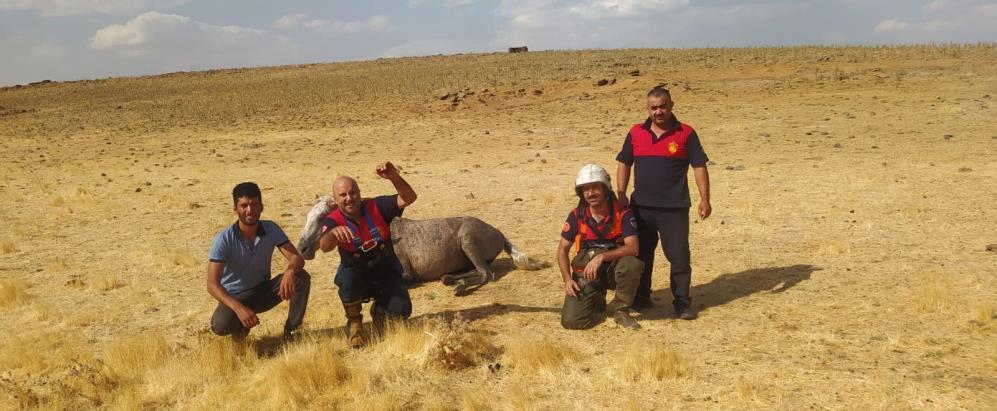 Siverek'te su kuyusuna düşen atı itfaiye ekipleri kurtardı