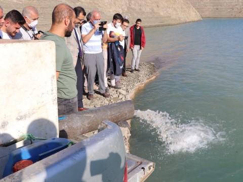 1 milyon 485 bin pullu sazan yavrusu suya bırakıldı ( Video Haber )