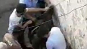 Çarşaflı erkek hırsız damda uyuyakalınca yakayı ele verdi ( Video Haber )